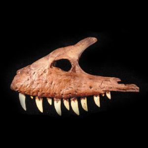albertosaurus maxilla fossil replica