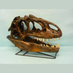 Allosaurus_skull_replica_S037