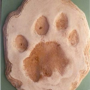 African Lion Footprint Cast Replica Models