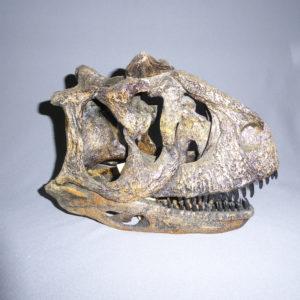 carnotaurus dinosaur skull replica