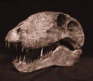 Dimetrodon limbatus Skull Replica