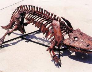 eryops megacephalus fossil skeleton