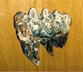 American Mastodon Tooth Replicas