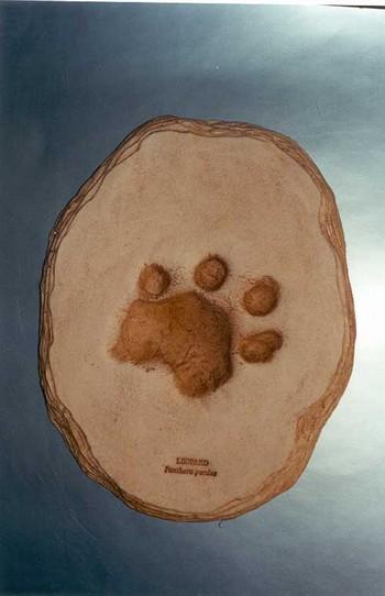 Leopard Footprint Cast Replica Models