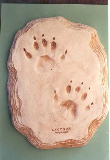 Raccoon Footprint Cast Replica Models