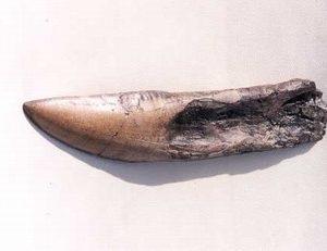 Giganotosaurus Dinosaur Tooth Replicas Models