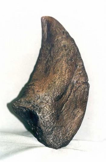 Camarasaurus Claws Replicas Models