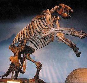 Eremotherium Laurillardi Giant Ground Sloth Skeleton