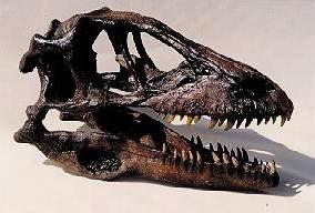 Deinonychus Dinosaur Skulls Models Replicas