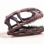 SXNwn-oBIhE-CwNyb-Abelisaurus_dinosaur_skulls_model_replica