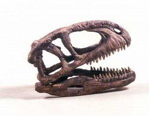 Abelisaurus Dinosaur Fossil Skull Replica