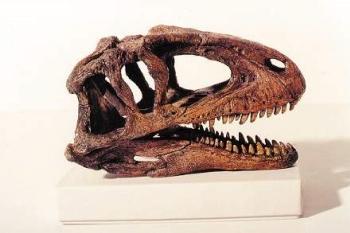 Sinraptor Dinosaur Skull Replica