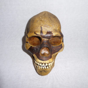 Skull 5 Homo Sapien