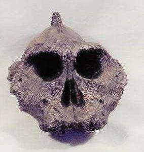Black Skull Replica