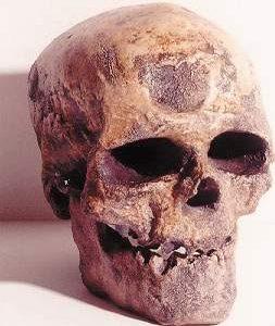 Cro-Magnon I Skulls Replicas Models