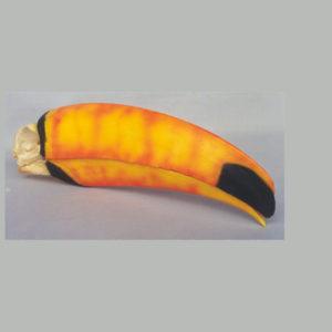 toco toucan skull replica