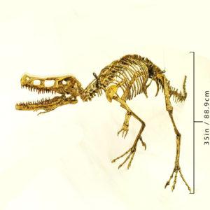 Velociraptor-skeleton-replica-AA321