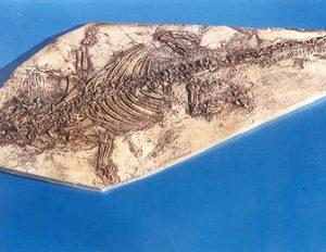 Psittacosaurus Dinosaur Skeleton Plaques