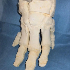 african elephant foot replica