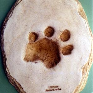 african leopard footprint cast