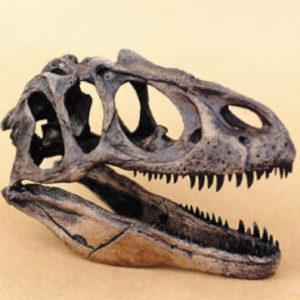 allosaurus fragilis skull replica