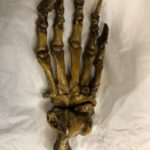 Cave Bear Foot Replica
