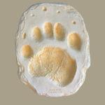 black-bear-negative-footprint-WLP103