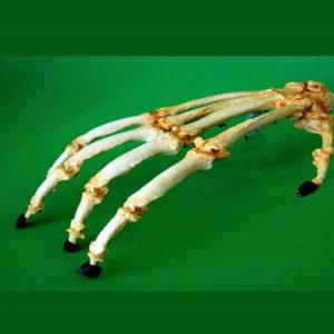 bornean orangutan hand replica