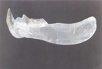Dunkleosteus Fish Cast Model Replica
