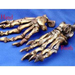 cave bear foot replica