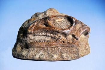 Gasparinisaurus Skull Plaques