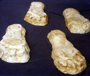 Yeti Bigfoot Abominable Snowman Footprints Replica