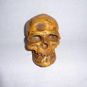 cro-magnon 1 skull