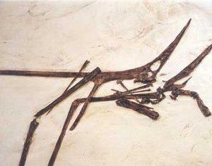 Nyctosaurus Skeleton Art Panel