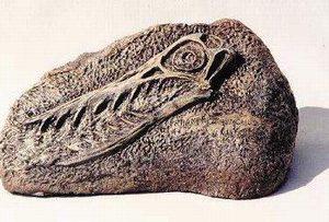 Rhamphorhynchus Skull Plaques