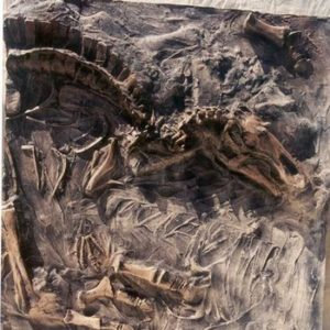 Albertosaurus Duckbill Dinosaur Elements Sand Box