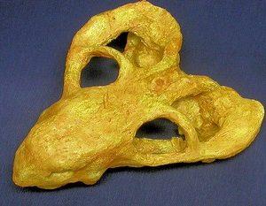 Dicynodontian Skull Cast Replica Model