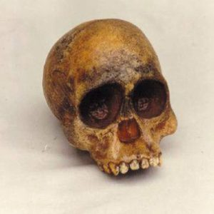 Taung Baby Reconstructed Skulls Replicas Models
