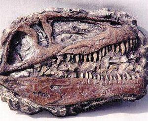 Giganotosaurus Mini Dinosaur Skull Plaque