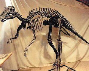 Maiasaura Juvenile Skeleton