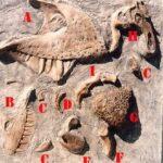 Dinosaur Bones Sand Box Panel