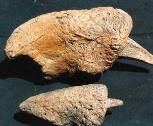 Eremotherium Mirabile Giant Ground Sloth Claw
