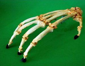Orangutan Articulated Adult Hand Replica Model