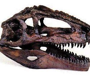 Giganotosaurus Dinosaur Skulls Replicas Models