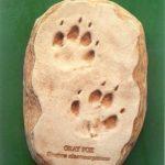 Gray Fox Footprint Cast Replica Models