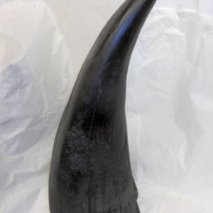 White Rhinoceros Horn Replicas Models
