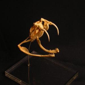 gaboon viper skull replica
