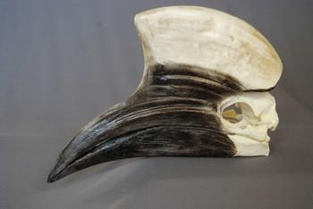 Yellow Casqued Male Hornbill Skulls Replicas Models