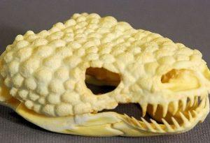 Gila Monster Skull