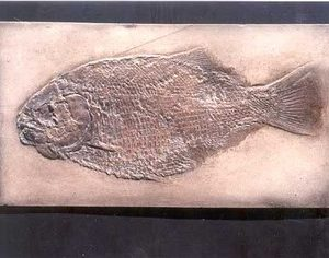 Dapedius Punctatus Fish Cast Plaque